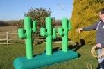 Cactus Lasso