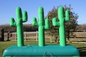 Cactus Lasso 1