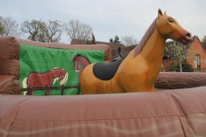 Rodeo Horse_5498